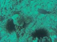 Nautilus Reef 5