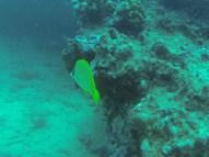 Nautilus Reef 14