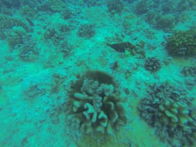 Nautilus Reef 19