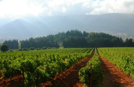 bekaa_valley_011_vineyards