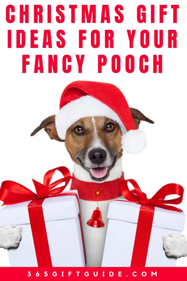 Christmas Gift Ideas for Your Fancy Pooch