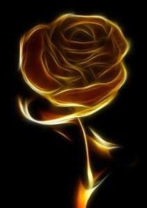rose-81828_1280
