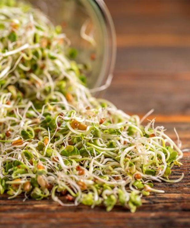 Πώς θα καλλιεργήσετε φύτρα στην κουζίνα σας