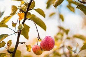 Τα καλύτερα φθινοπωρινά τρόφιμα