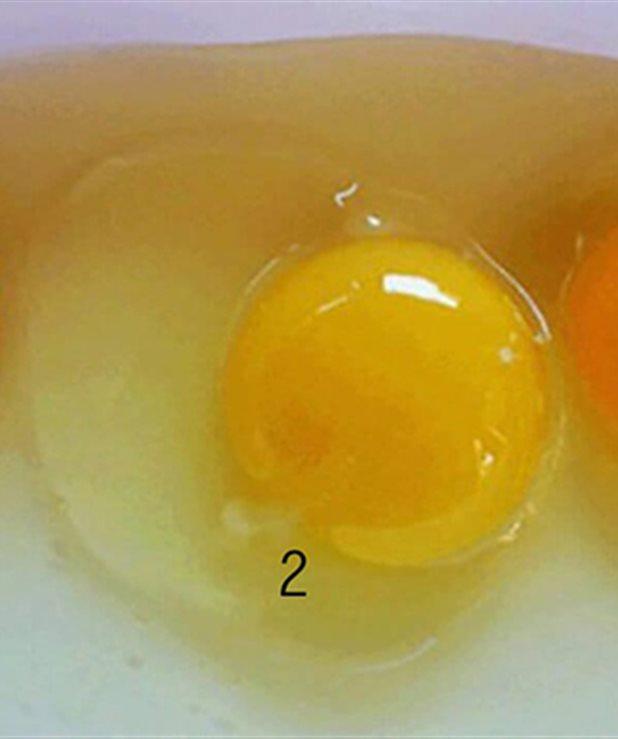 Γνωρίζετε ποιο από αυτά τα τρία αυγά είναι το πιο υγιεινό;