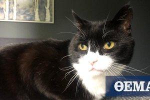 Βρετανία: Στη... σύνταξη βγαίνει ο Πάλμερστον, ο γάτος του Φόρεϊν Όφις