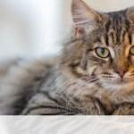 Έχεις κατάβει πόσα χρόνια ζουν οι γάτες τελικά;