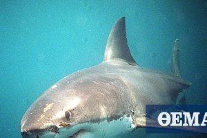 Αυστραλία: Νεκρός άνδρας από επίθεση καρχαρία σε δημοφιλή τουριστική περιοχή