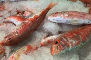 ΕΕ-Βρετανία: Τίνος είναι τα ψάρια της Μάγχης; | DW | 19.11.2020