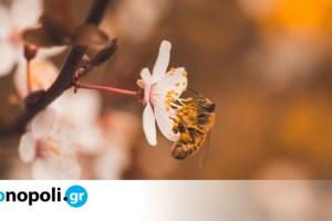 Ολλανδία: Μέλισσες εκπαιδεύονται για να ανιχνεύουν τον κορoνοϊό - Monopoli.gr
