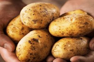 Παραπέμπεται εταιρεία που διακινούσε ποσότητες πατάτας με ψεύτικη ένδειξη