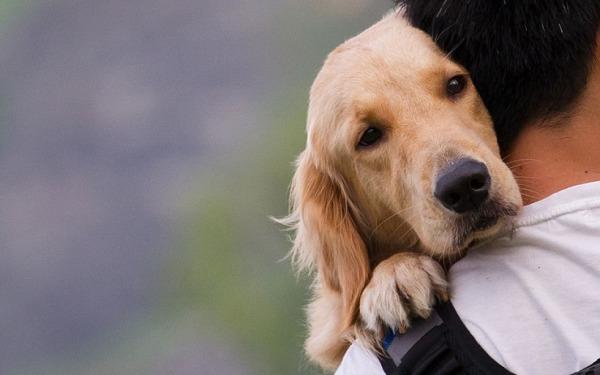 Βουλή: Ψηφίστηκε το νομοσχέδιο για τα ζώα συντροφιάς