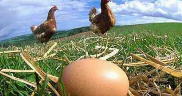 """Лечителят Панайот Трифонов: """"Спете върху сурови яйца и забравете за болести и несгоди!"""""""