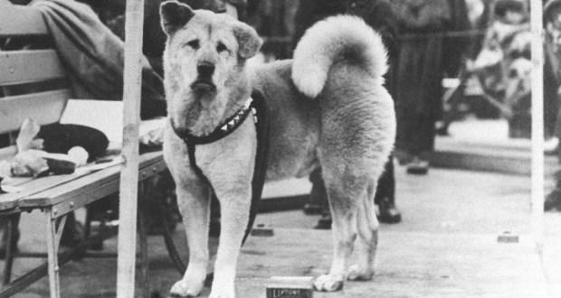 Кучето Хачико от гара Шибуя – история за безграничната преданост и вечната вярност