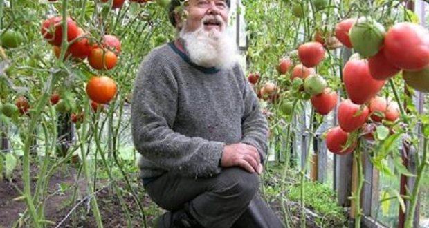 Съвети от стар градинар които ще Ви помогнат да имате градина за пример без да ползвате изкуствени торове и отрови!