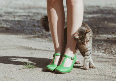 Никога не гонете котка която се гали в краката ви-ето какво означава