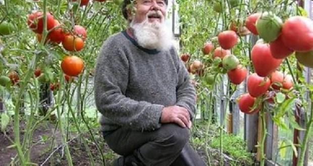 Най-добрите съвети от стар градинар
