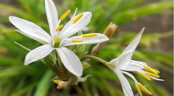 Това растение струва стотинки не е претенциозно но ползите от него са колосални