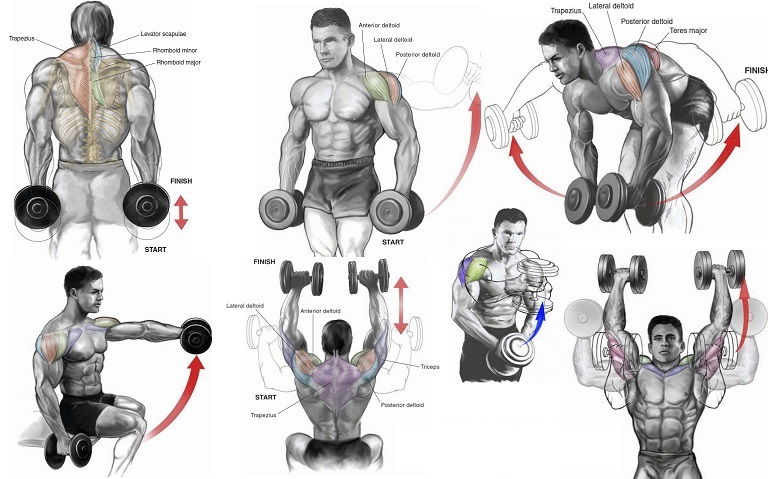 Top 6 Dumbbell Exercises for Shoulders GYM LEGION