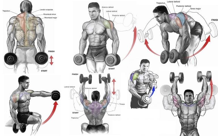Top 6 Dumbbell Exercises for Shoulders GYM LEGION