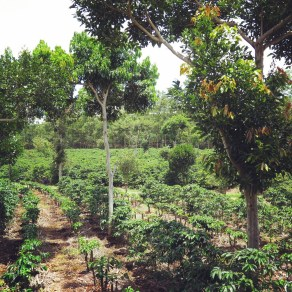 Doka Estate Coffee Plantation