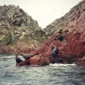 Sea Lions at Ballestas Islands