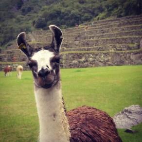 Photobombing Machu Picchu