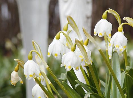 blommor-närbild
