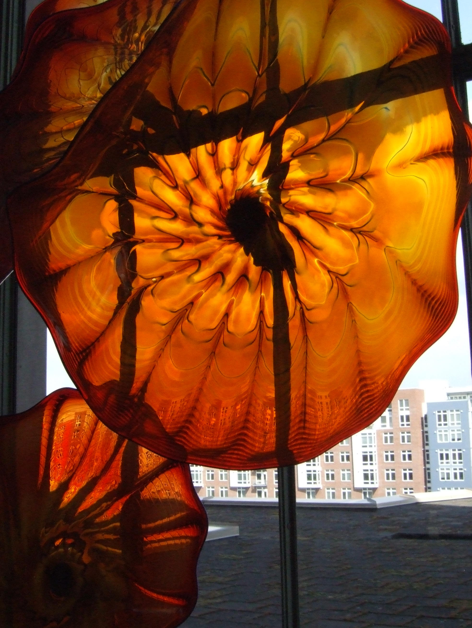 Closeup of Chihualy poppy window