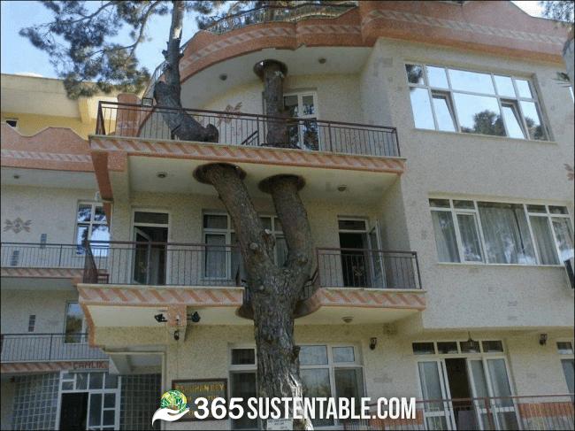 Respetar nuestros árboles