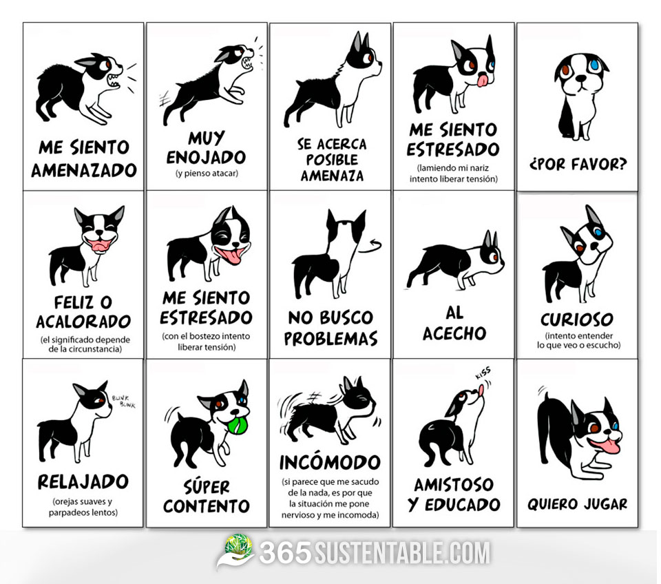 lenguaje-perros