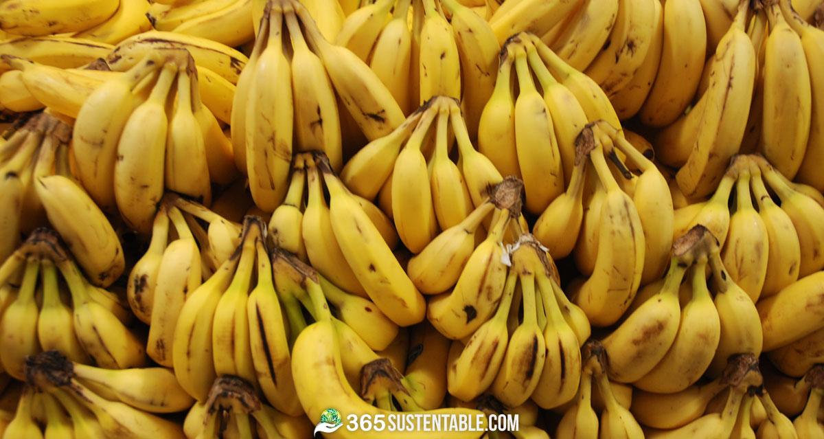 bananas-platanos
