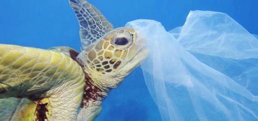 Contaminacion de los oceanos