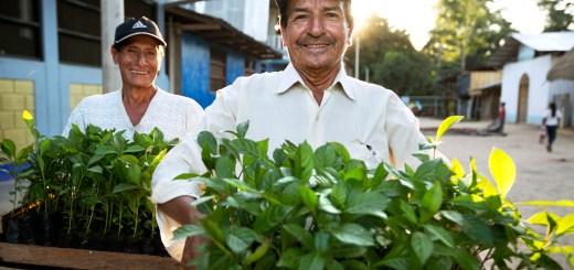 El buscador que planta arboles mientras buscás en internet: Ecosia