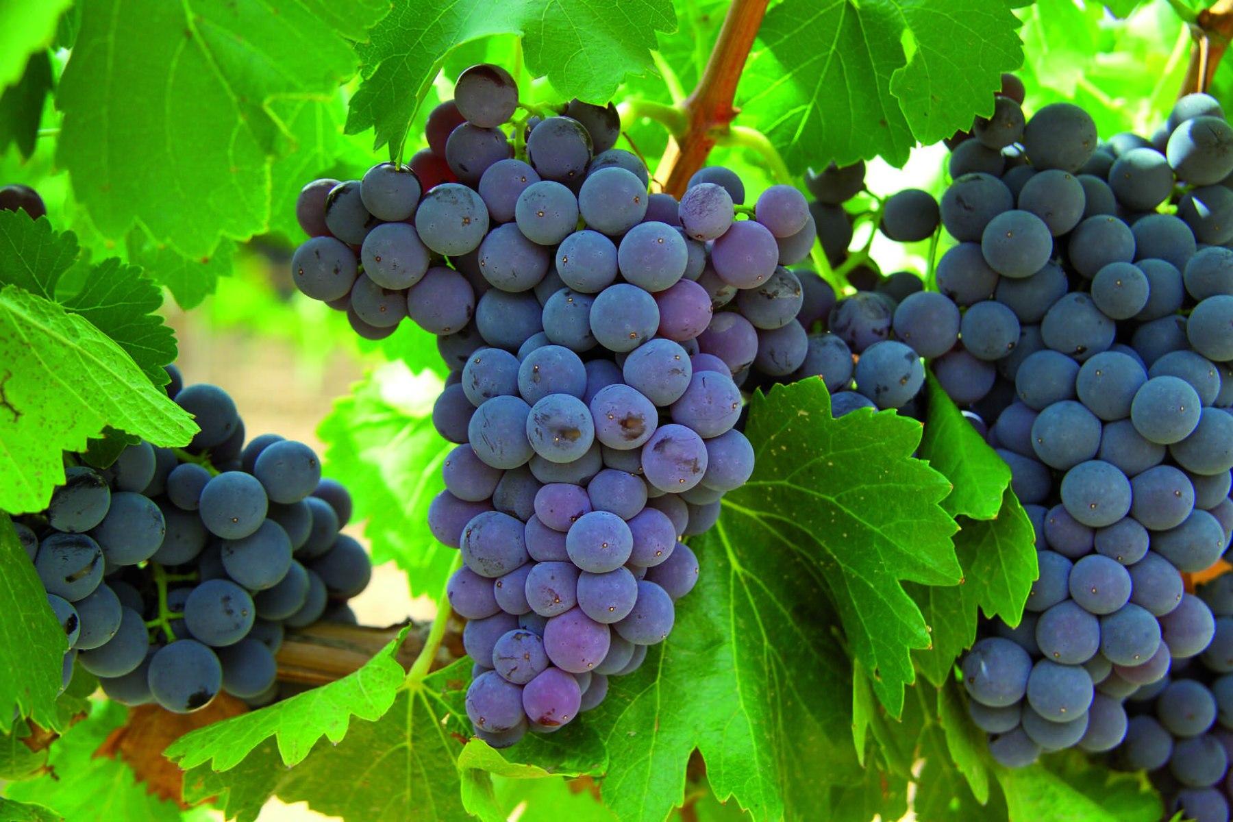 Uvas, Limpieza Natural