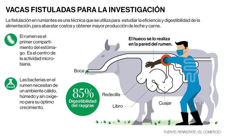 Infografia de huecos a las vacas