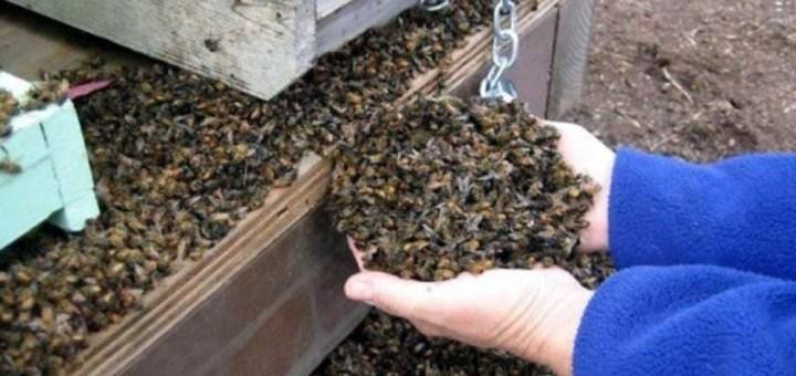 72 millones de abejas muertas