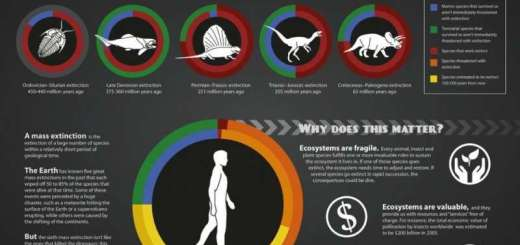 La Tierra experimenta su segunda extinción masiva después de los dinosaurios