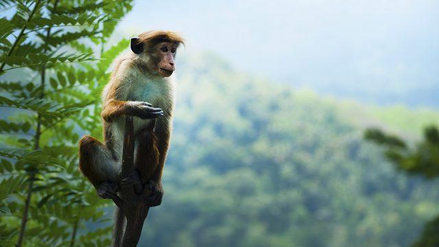 Exterminio animal: en 40 años los humanos exterminaron al 60% de los animales en la tierra