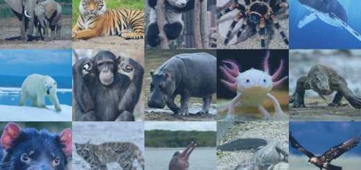 Los humanos son responsables directos del exterminio animal