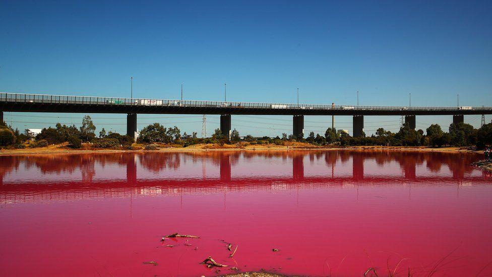 Lago rosado de Melbourne