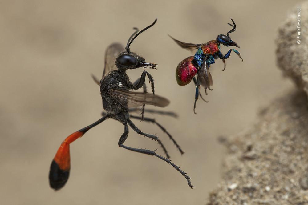 Frank Deschandol / Wildlife Photographer of the Year