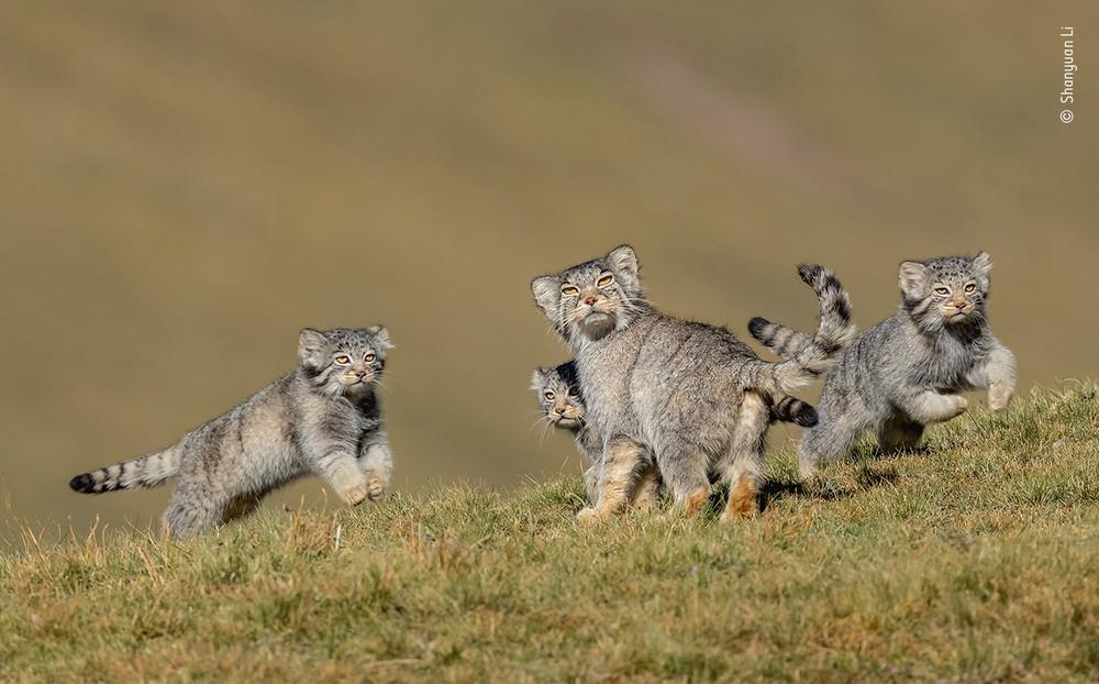Shanyuan Li / Wildlife Photographer of the Year