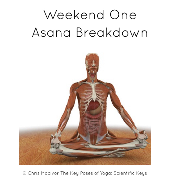 Yoga Training Yoga Teachers Yoga Instructor Yoga Asanas Yoga Teacher Training 365well