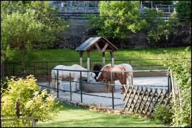Horses having breakfast