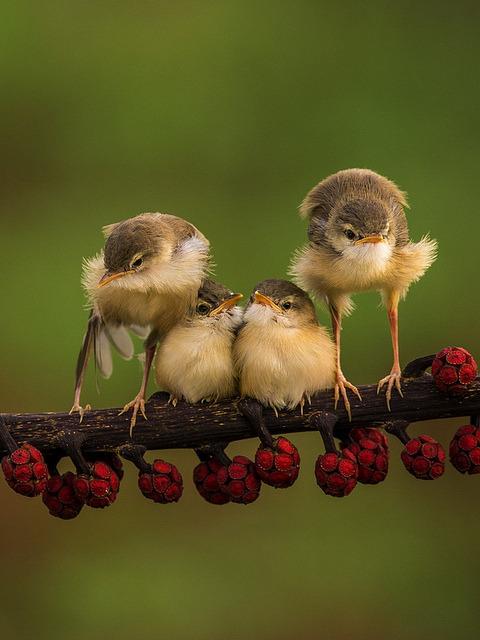 followthewestwind:</p><br /> <p>Cute Bird by Sijanto on Flickr.<br /><br />