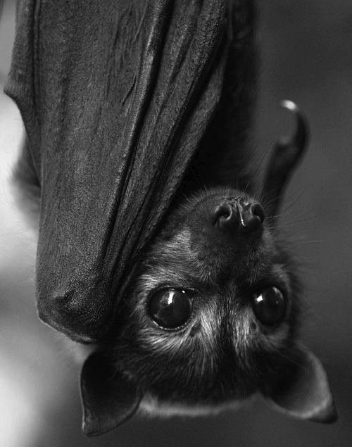 Wolf loves these creatures.<br /> They follow him around and<br /> live in a cave in his mansion.<br /> Are they bats?<br /> Or are they creatures who<br /> turn themselves into bats to fly?<br /> Find out in THE DEAD GAME by Susanne Leist<br /> And learn how to fly.</p> <p>http://www.amazon.com/author/susanneleist<br /> http://www.outskirtspress.com/thedeadgame