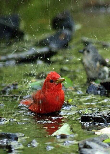 Rain on me.<br /> I don't care.<br /> I'm still cute.