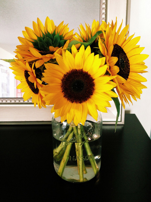 photography swag tumblr photo hipster twitter picture pic flower nature facebook c4c sunflower