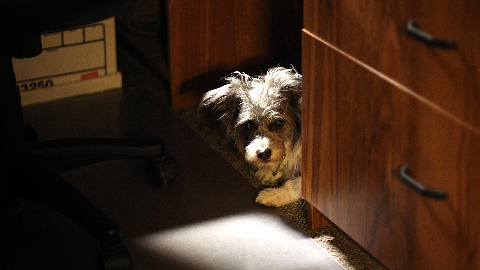 Pinto's hiding place